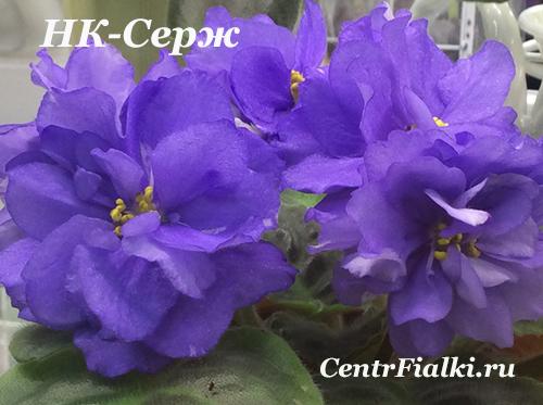 НК-Серж (Н.Козак)
