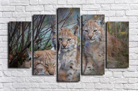 Модульная картина Животные 23