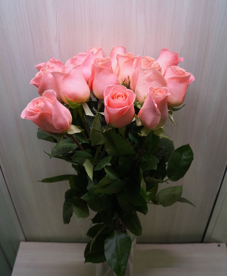 15 роз - Хирмоса (60 см)
