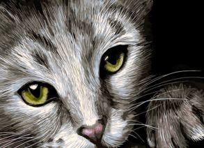 Алмазная мозаика «Кошачий взгляд» 30x40 см