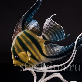 Аквариумная рыбка Скалярия, Rosenthal, Германия, 1970 гг.
