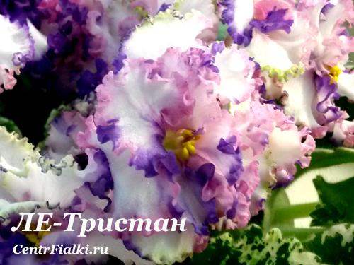 ЛЕ-Тристан (Е.Лебецкая)