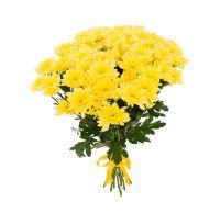 9 желтых кустовых хризантем Балтика