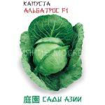 Kapusta-belokochannaya-Albatros-F1-Sady-Azii