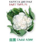 Kapusta-cvetnaya-Vajt-Pirl-F1-Sady-Azii