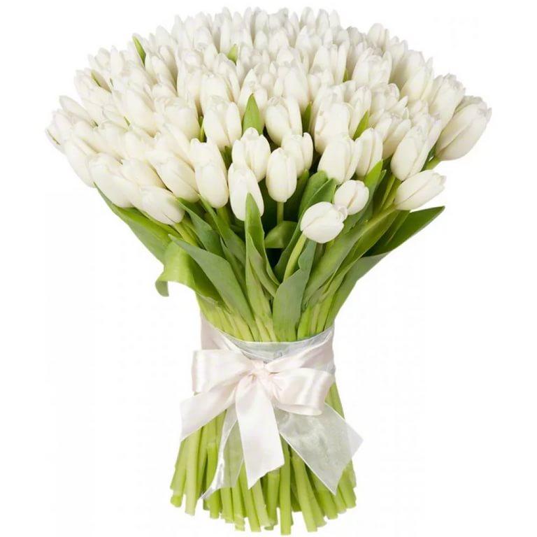 Тюльпаны белые (от 15 шт)