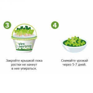 Набор для выращивания Моя микрозелень Базилик