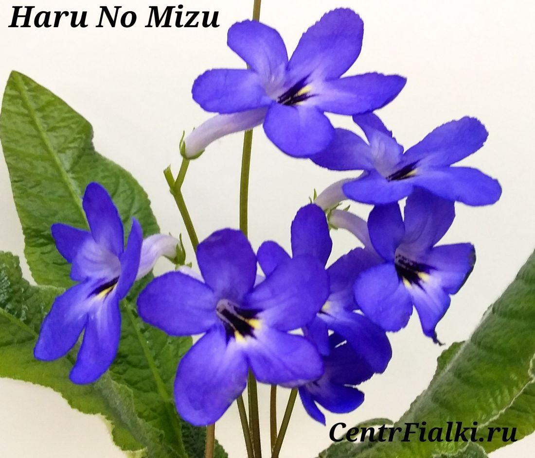 Haru No Mizu (T.Okuto)