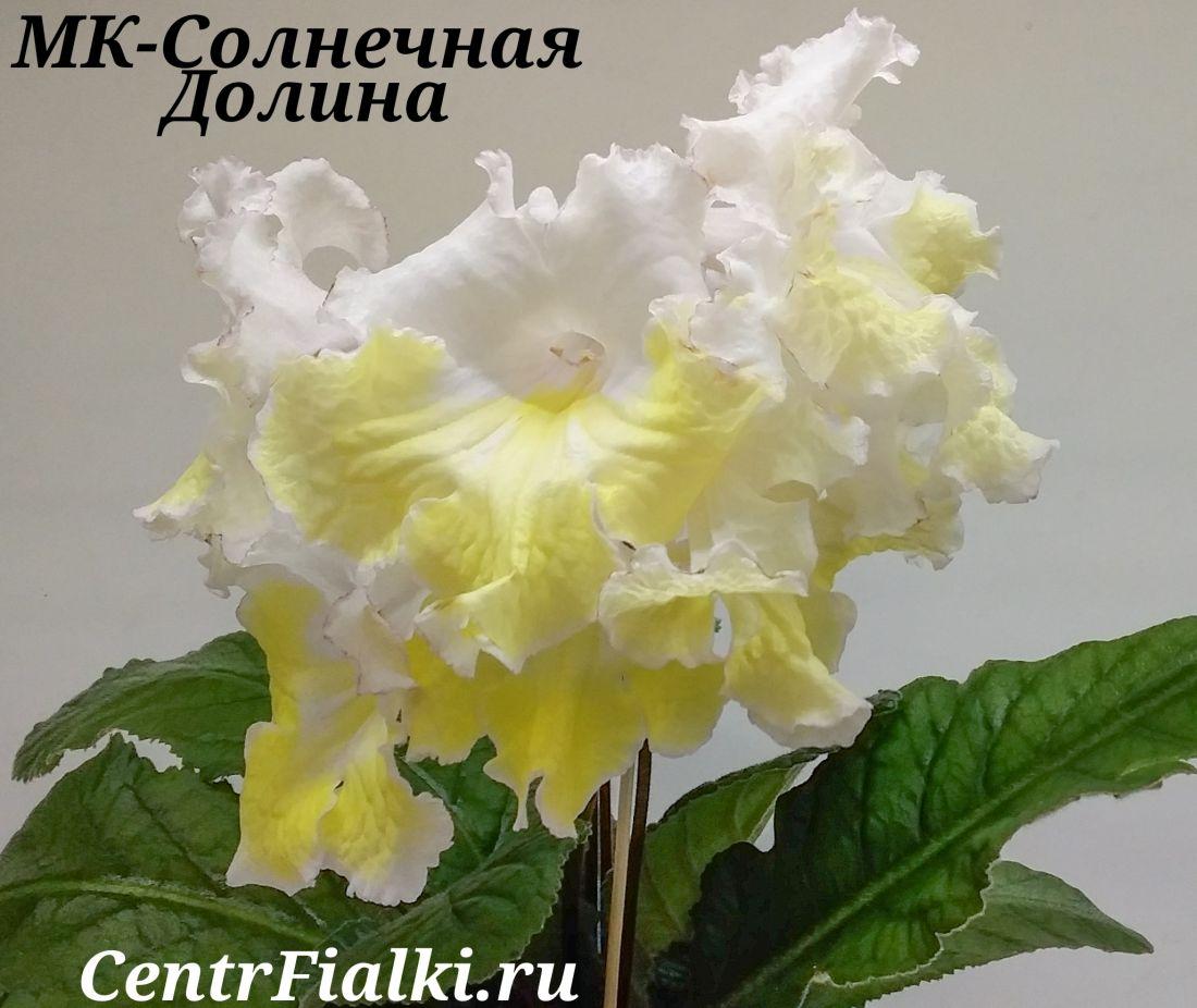 МК-Солнечная Долина (М.Карпова)