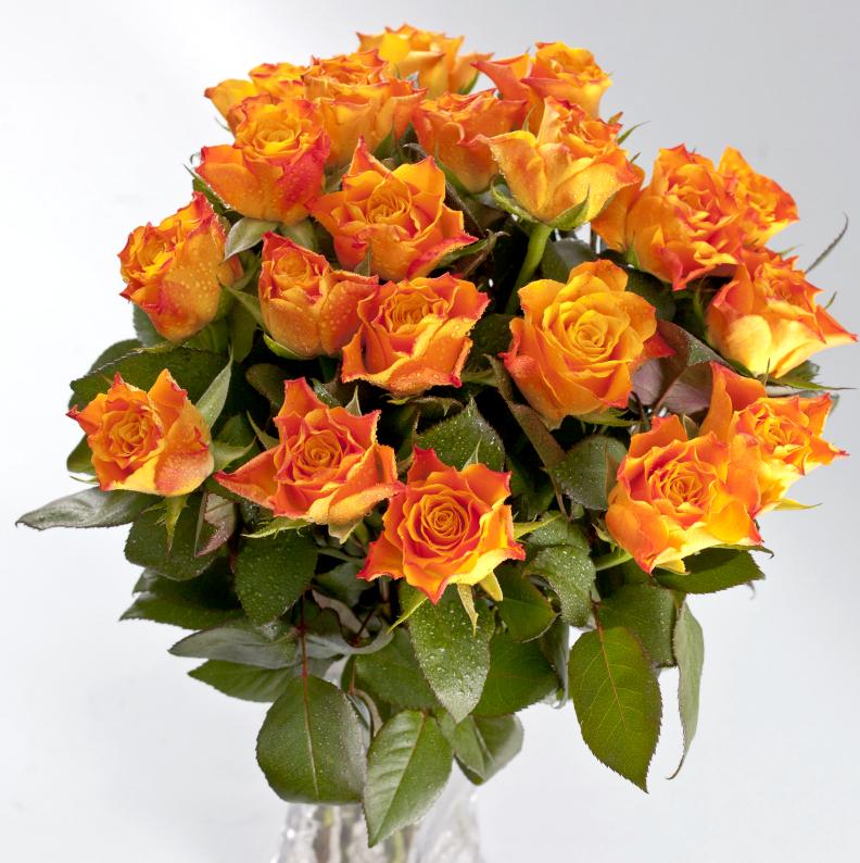 Оранжевые розы 40 см (Кения)