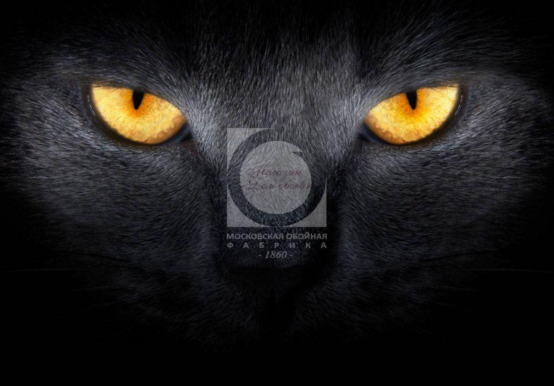 Глаза кота 3032