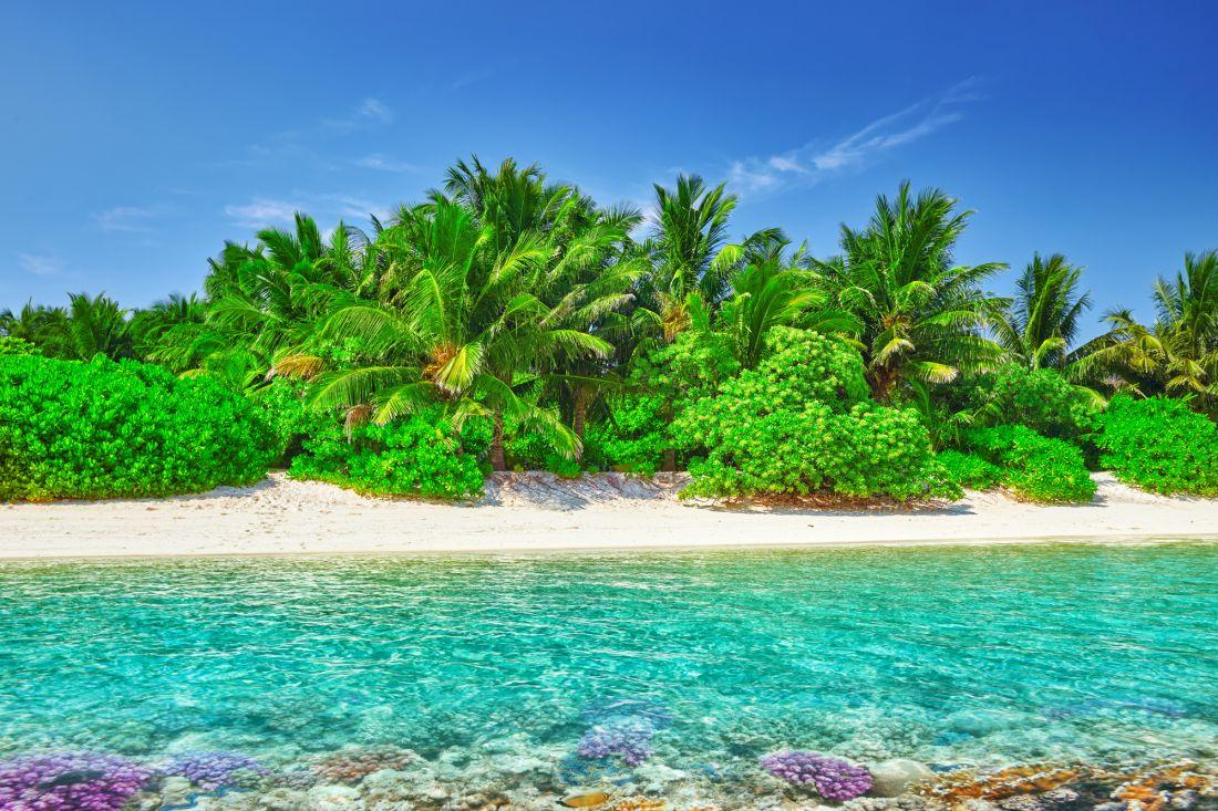 Пальмы и море 9-111