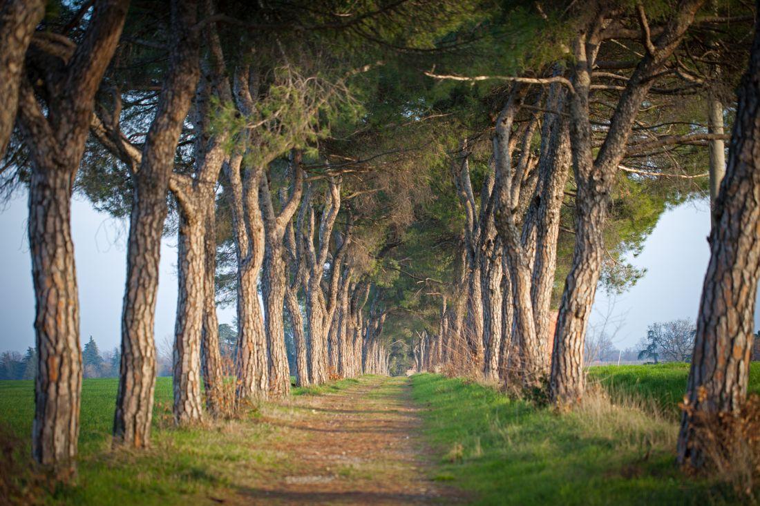 Аллея из деревьев 10-128