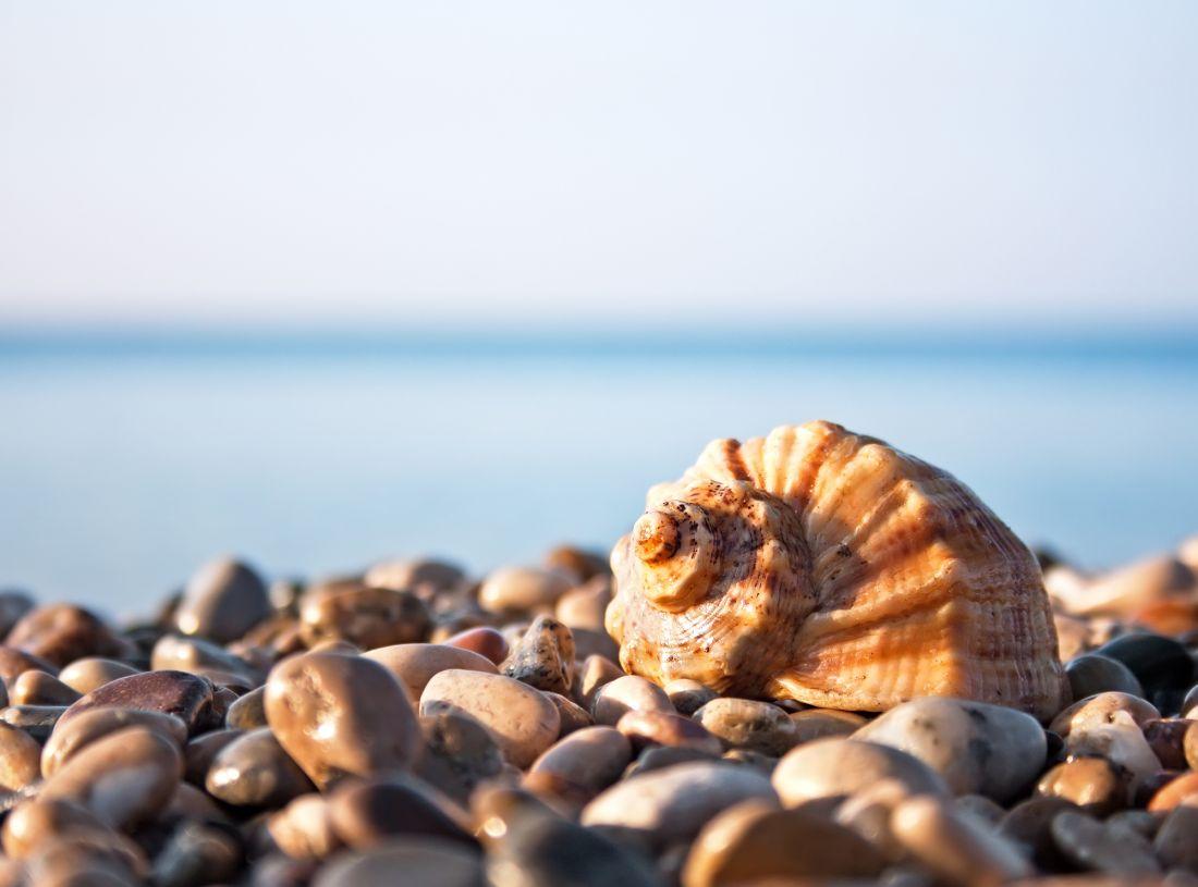 Морские камушки и ракушка у моря 9019