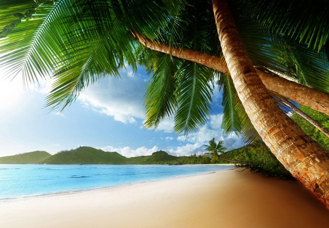 Пальмы у моря 9002
