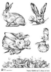 Rabbit set 2
