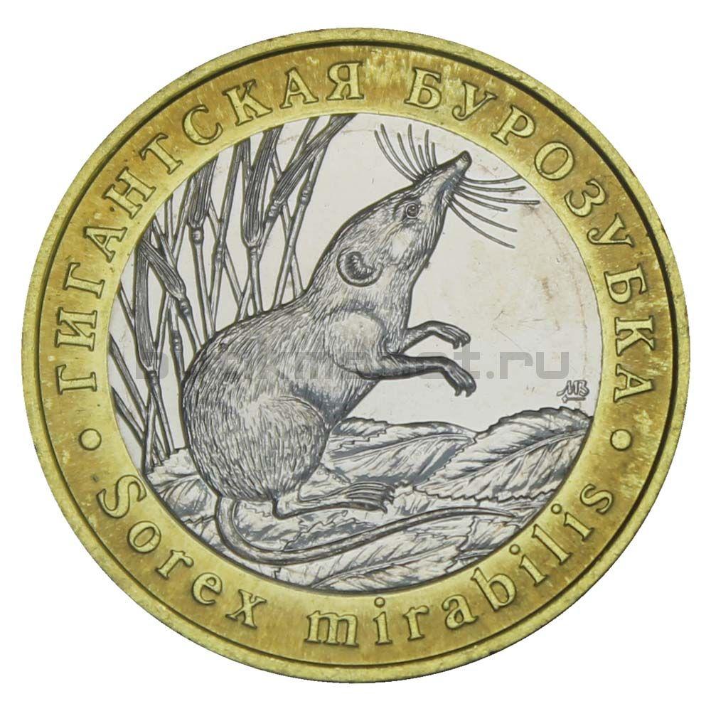 Россия Монетовидный жетон 5 червонцев 2019 ММД Гигантская Бурозубка (Красная Книга)