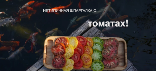 [Нетипичный Фермер] Нетипичная шпаргалка о томатах (Анна Акинина)