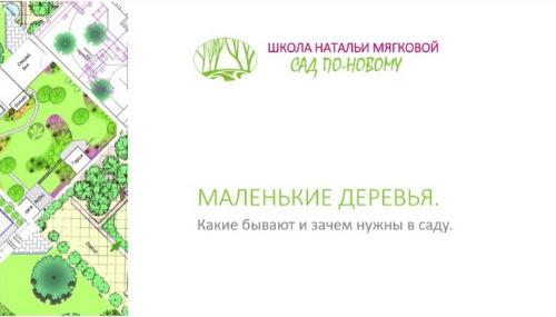 Маленькие деревья (Наталья Мягкова)