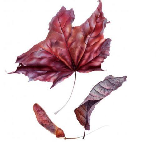 Все про листья. Практика (Светлана Лансе)