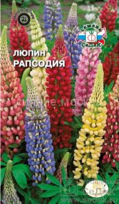 Люпин Рапсодия (СеДек)
