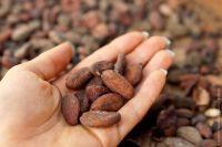 Какао бобы сырые (необжаренные), Га́на ,100 грамм