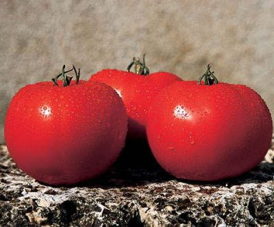 Семена томата «Альянс» F1 (10 семян) от Clause
