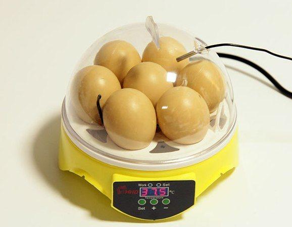 "Мини-инкубатор на 7 яиц ""HHD 7"" с терморегулятором."