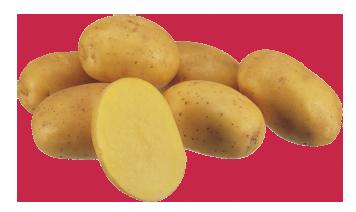 картофель сорта Констанс(10 шт)