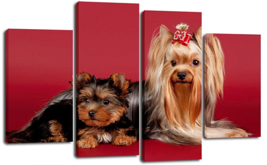 Модульная картина Йорк и щенок
