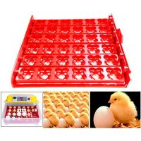 Аксессуар для инкубатора SITITEK 48,96,112: универсальные лотки в сборе на 36/144 яиц
